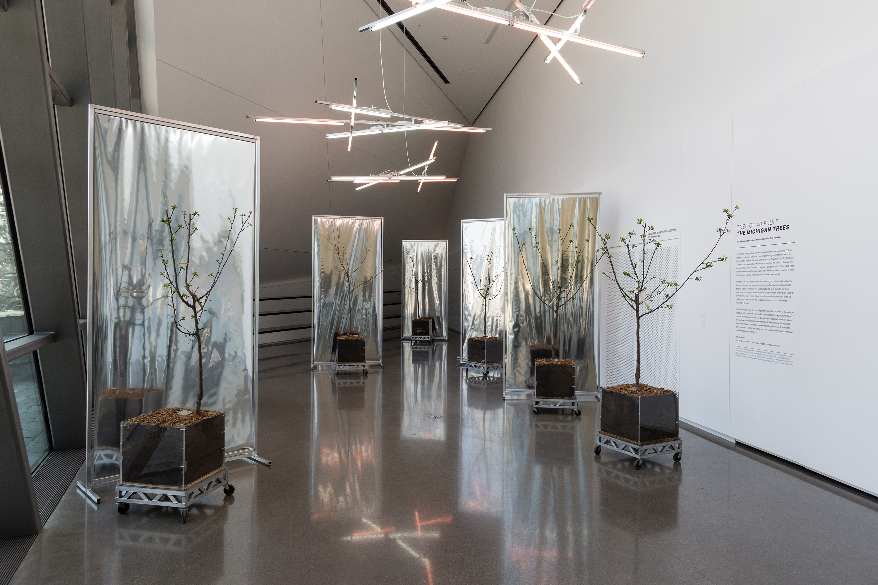 <i>Tree of 40 Fruit: The Michigan Trees</i>, installation view at the Eli and Edythe Broad Art Museum at Michigan State University, 2016. Photo: Eat Pomegranate Photography