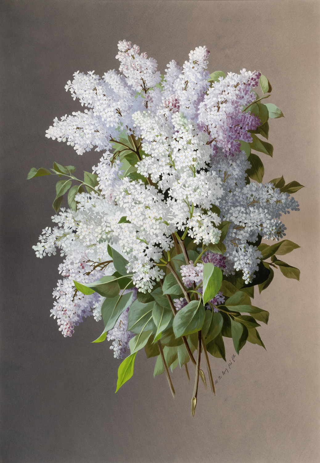 Raoul-Victor-Maurice Maucherat de Longpré, <i>Lilacs</i>, ca. 1890s. Eli and Edythe Broad Art Museum, Michigan State University, gift of the Estate of Elizabeth L. Jarrad.