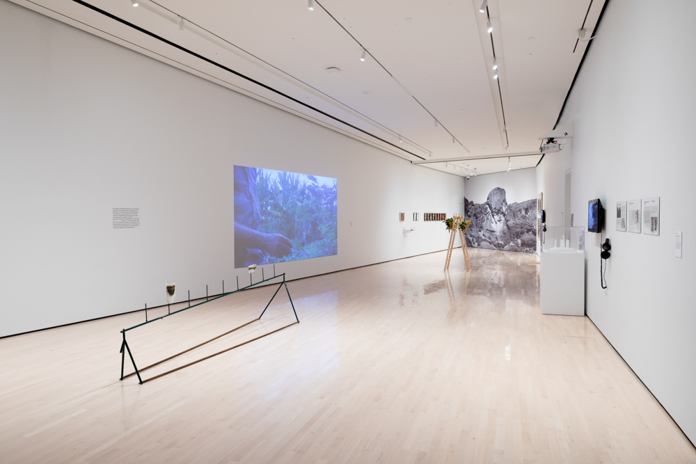 <i>Never Spoken Again: Rogue Stories of Science and Collections</i> installation view at the Eli and Edythe Broad Art Museum at Michigan State University, 2020. Photo: Eat Pomegranate Photography.