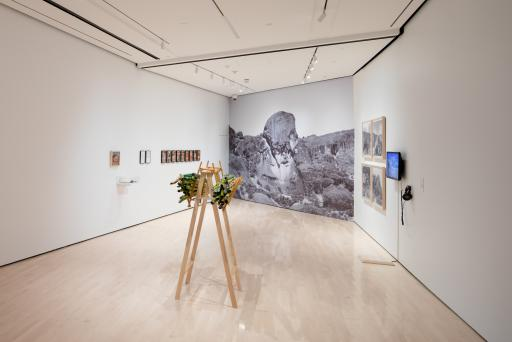 <i>Never Spoken Again: Rogue Stories of Science and Collections</i>, installation view at the Eli and Edythe Broad Art Museum at Michigan State University, 2020. Photo: Eat Pomegranate Photography