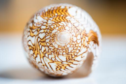 Jenny Kendler, Research image of Textile Cone Snail for <i>Shroud for an Atheist</i>, 2020. Courtesy the artist. Photo credit: Jenny Kendler